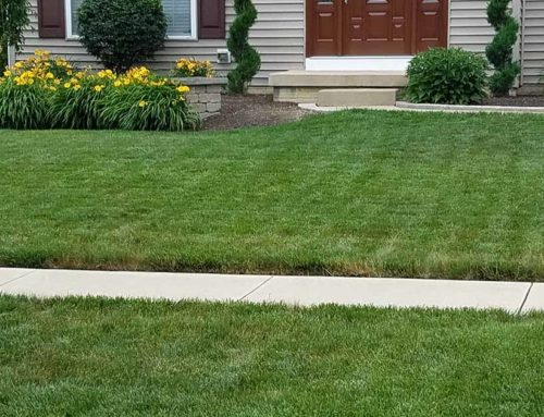 How to Build a Strong Foundation for Your Lawn