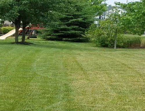 Proper Mowing Techniques to Keep your Lawn Green and Healthy