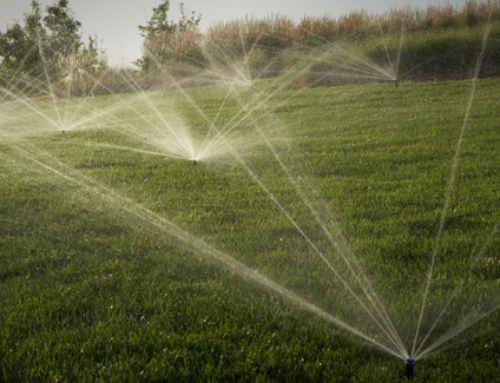 How Often Should I be Watering My Lawn in the Summer