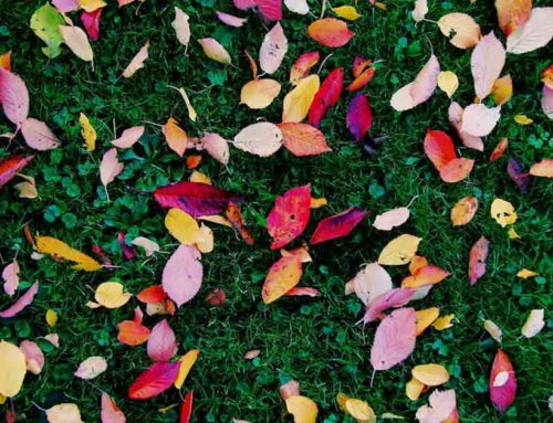 Fall Lawn Care Tips are Key to Next Year's Green Lawn